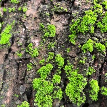 Moss on bark